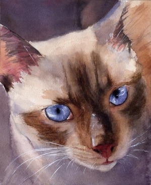 Bild Siamese Cat Apple Head by Rachel Parker